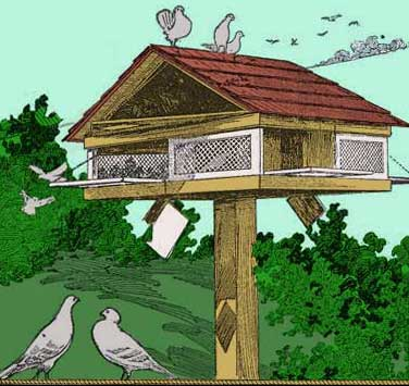 Free Pigeon House Plans All Free Plans From Stan 39 S Plans